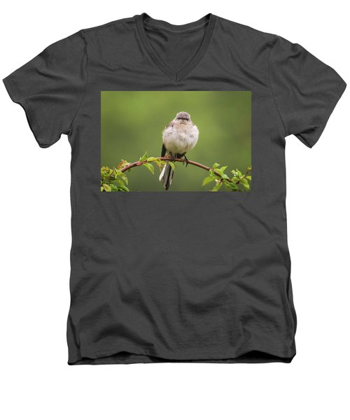 Fluffy Mockingbird Men's V-Neck T-Shirt by Terry DeLuco