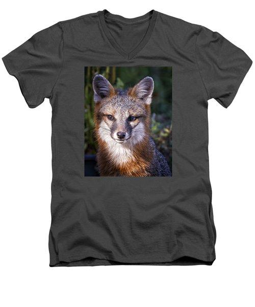 Fox Gaze Men's V-Neck T-Shirt by Alan Raasch