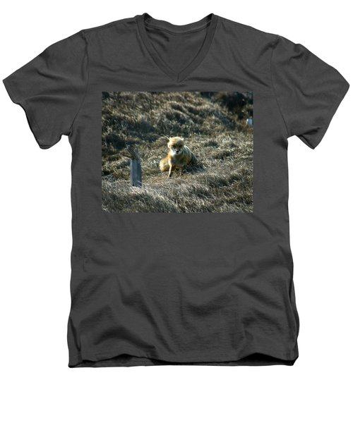 Fox In The Wind Men's V-Neck T-Shirt