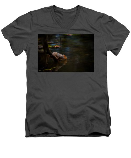 Fox Squirrel Drinking Men's V-Neck T-Shirt