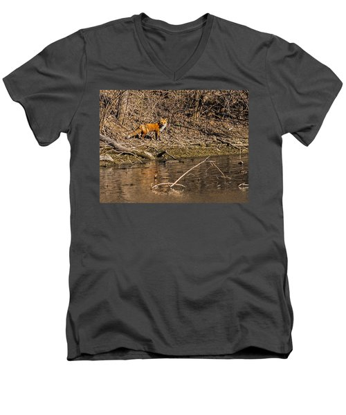 Fox Walk Men's V-Neck T-Shirt