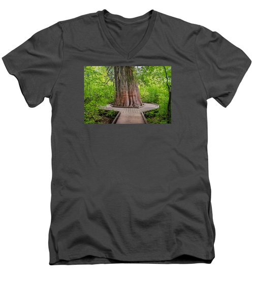 From Grove Of The Patriarchs 1 Men's V-Neck T-Shirt