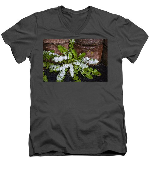 Frosted Dandelion Leaves Men's V-Neck T-Shirt by Deborah Smolinske