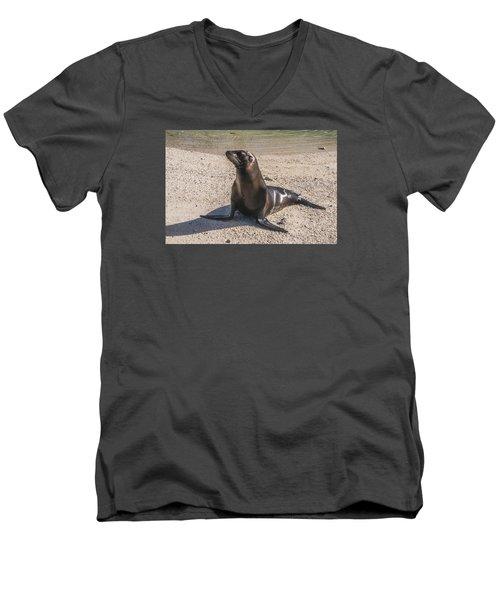 Galapagos Sea Lion Men's V-Neck T-Shirt