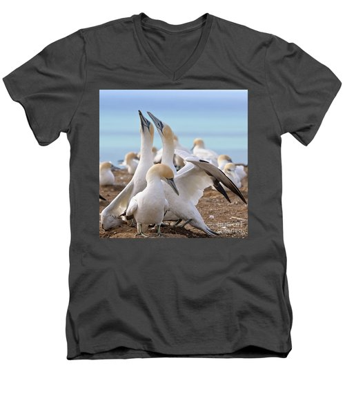Gannets Men's V-Neck T-Shirt