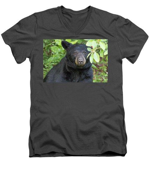 Gazing Black Bear Men's V-Neck T-Shirt
