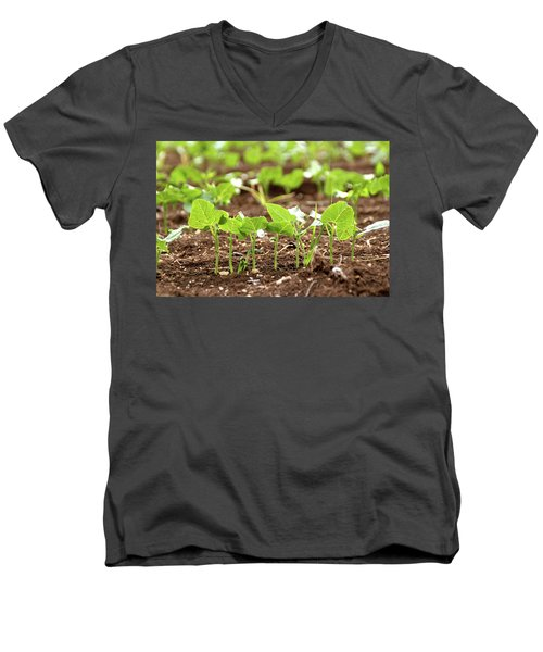 New Sprouts In The Promised Land Men's V-Neck T-Shirt by Yoel Koskas