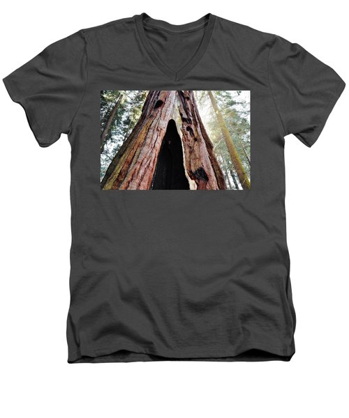 Giant Forest Giant Sequoia Men's V-Neck T-Shirt