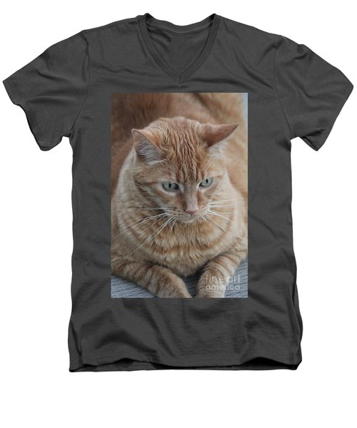 Ginger Cat Men's V-Neck T-Shirt