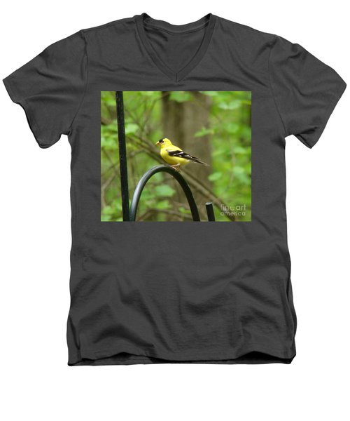 Men's V-Neck T-Shirt featuring the photograph Golden Finch by Rand Herron