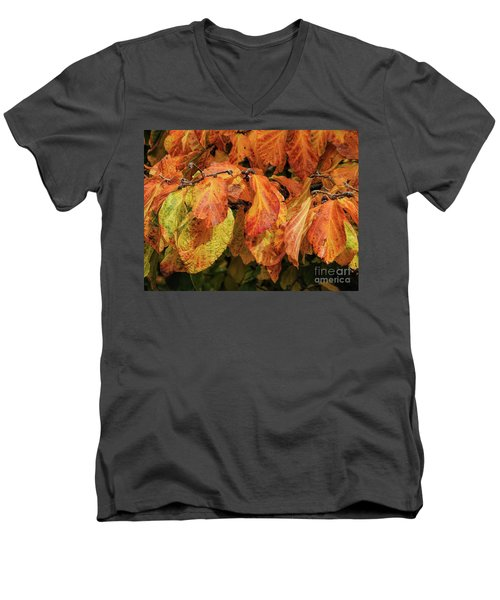 Men's V-Neck T-Shirt featuring the photograph Golden by Peggy Hughes