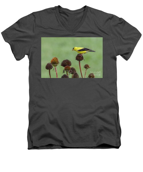 Goldfinch And Coneflowers Men's V-Neck T-Shirt