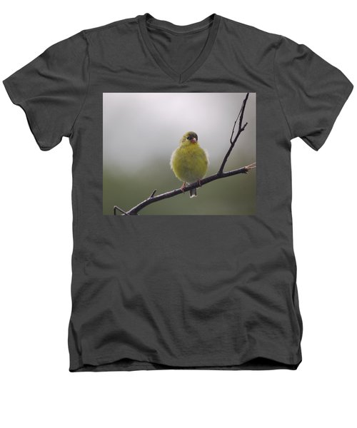 Men's V-Neck T-Shirt featuring the photograph Goldfinch Puffball by Susan Capuano