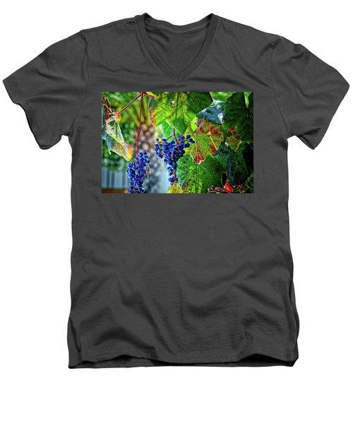 Grapes Men's V-Neck T-Shirt