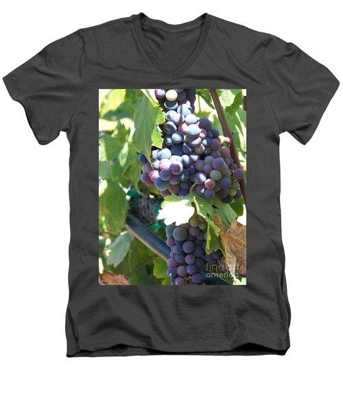 Grapevine Men's V-Neck T-Shirt by Pamela Walrath