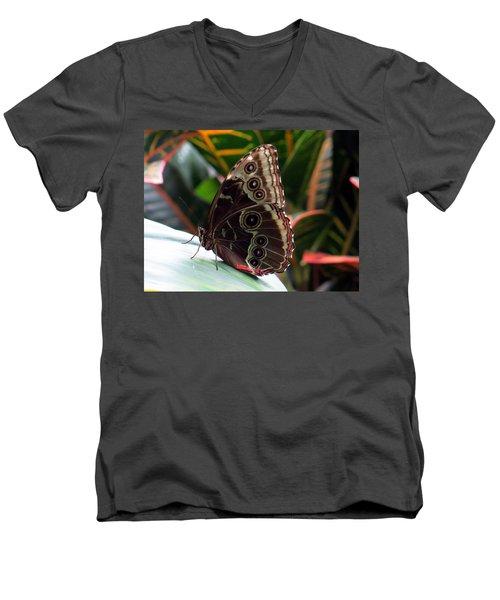 Gray Cracker Butterfly Men's V-Neck T-Shirt by Betty Buller Whitehead
