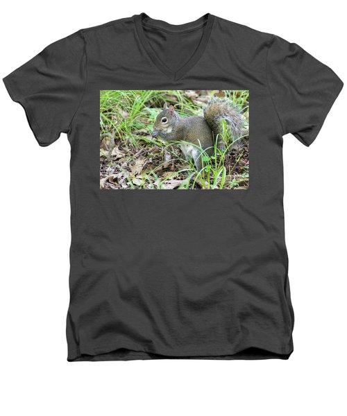 Gray Squirrel Eating Men's V-Neck T-Shirt