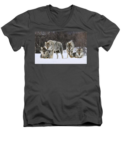 Gray Wolves Norway Men's V-Neck T-Shirt