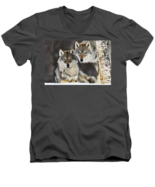 Gray Wolf Canis Lupus Pair In The Snow Men's V-Neck T-Shirt