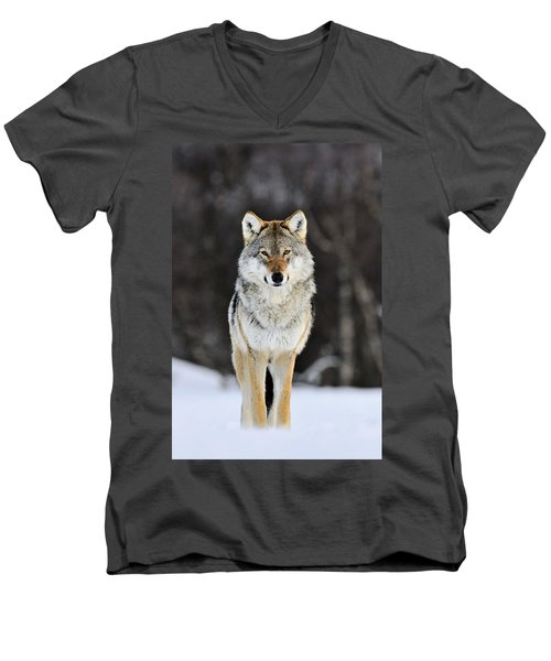 Gray Wolf In The Snow Men's V-Neck T-Shirt