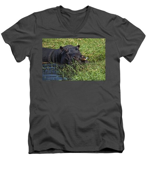 The Hippo And The Jacana Bird Men's V-Neck T-Shirt