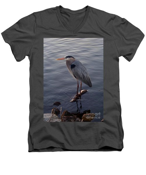 Great Blue Heron At Evening Men's V-Neck T-Shirt by Carol  Bradley