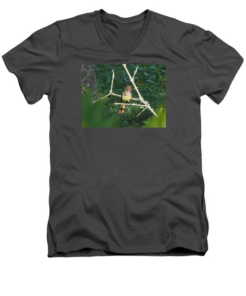 Great Crested Flycatcher Men's V-Neck T-Shirt