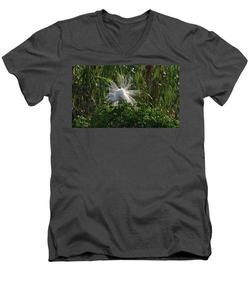 Great Egret Displays Windy Mating Plumage Men's V-Neck T-Shirt