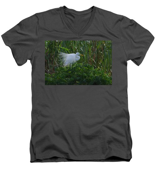 Great Egret Displays Windy Plumage Men's V-Neck T-Shirt
