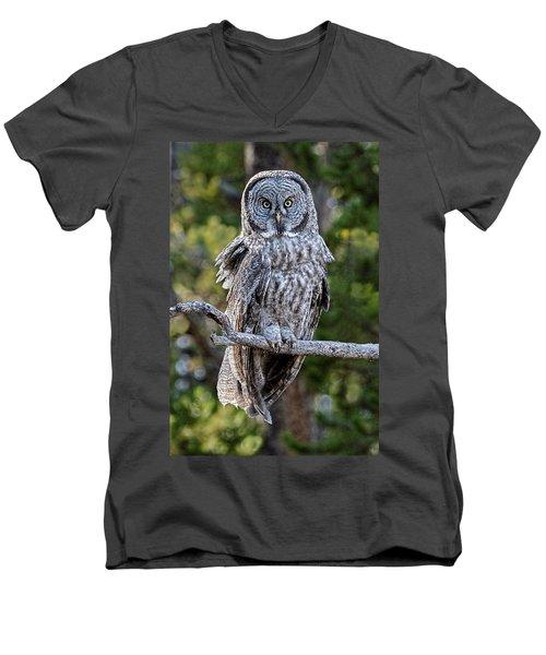 Great Grey Owl Yellowstone Men's V-Neck T-Shirt