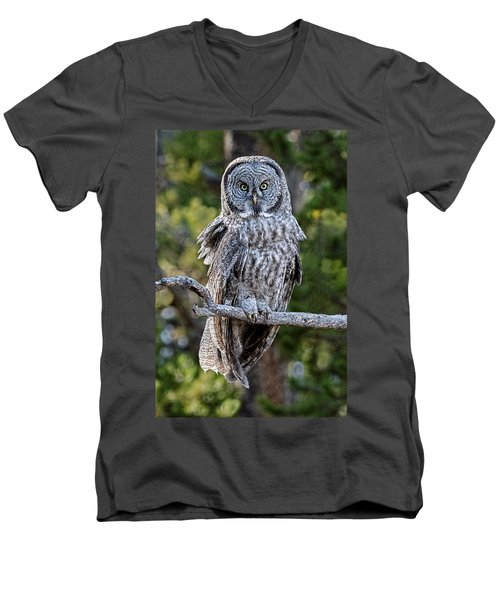 Great Grey Owl Yellowstone Men's V-Neck T-Shirt