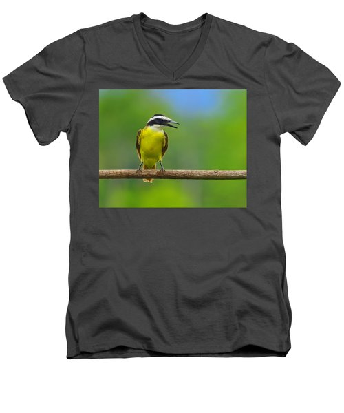 Great Kiskadee Men's V-Neck T-Shirt