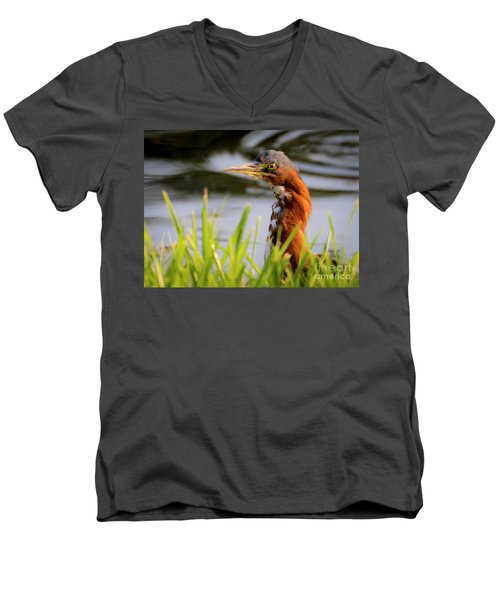 Green Heron Closeup  Men's V-Neck T-Shirt