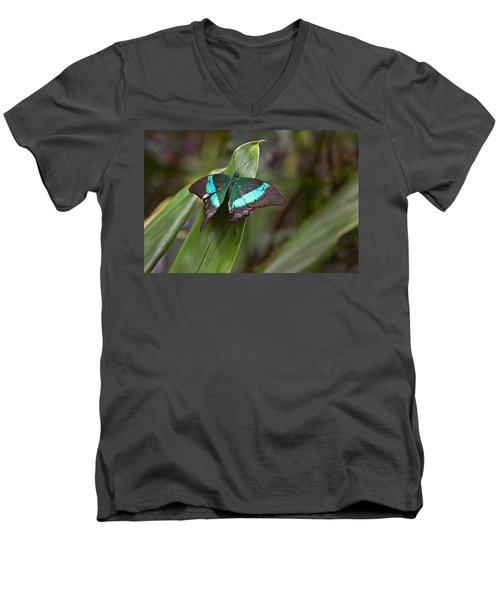 Men's V-Neck T-Shirt featuring the photograph Green Moss Peacock Butterfly by Peter J Sucy