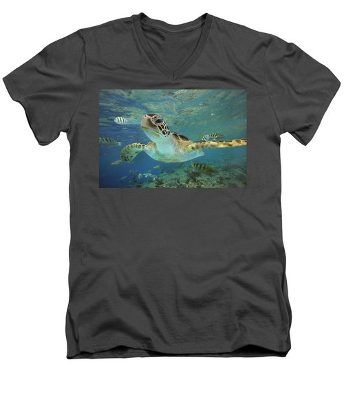 Green Sea Turtle Chelonia Mydas Men's V-Neck T-Shirt
