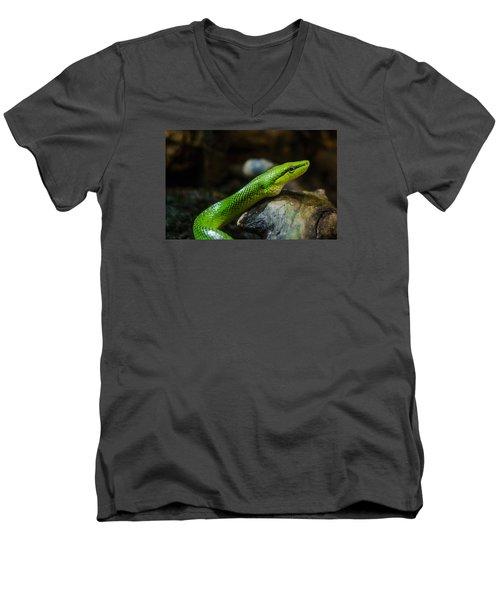 Green Snake Men's V-Neck T-Shirt by Daniel Precht