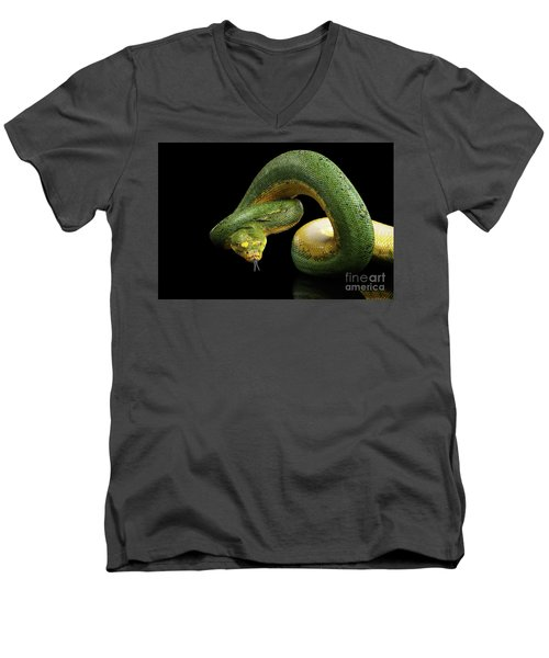 Men's V-Neck T-Shirt featuring the photograph Green Tree Python. Morelia Viridis. Isolated Black Background by Sergey Taran