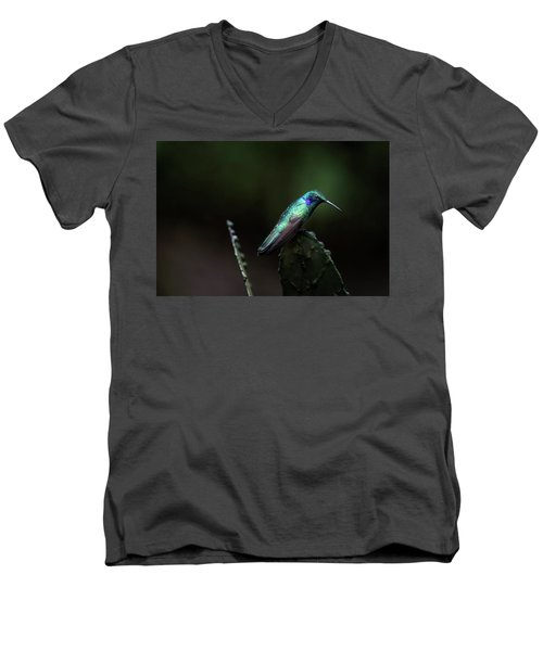 Green Violet Ear Hummingbird Men's V-Neck T-Shirt by James David Phenicie