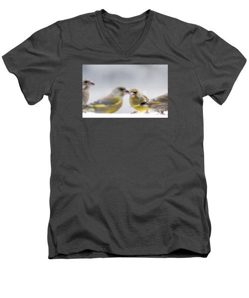Greenfinches Men's V-Neck T-Shirt