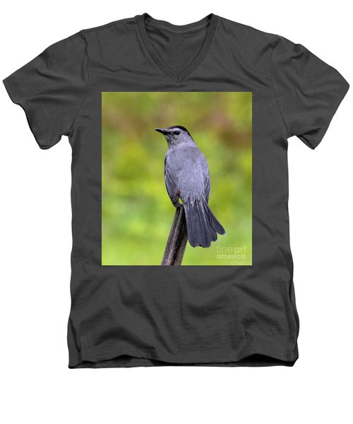 Men's V-Neck T-Shirt featuring the photograph Grey Catbird by Debbie Stahre