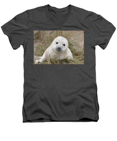 Grey Seal Pup Men's V-Neck T-Shirt