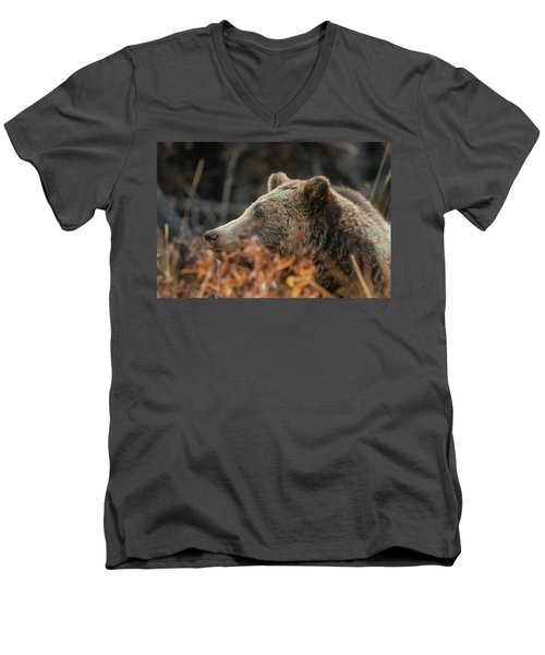 Grizzly Bear Portrait In Fall Men's V-Neck T-Shirt