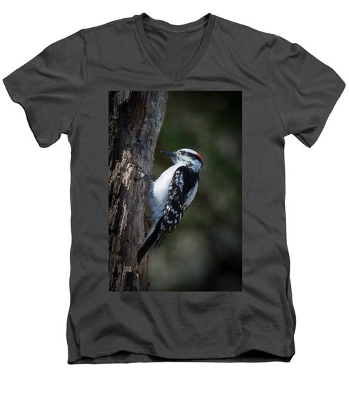 Downy Woodpecker Men's V-Neck T-Shirt by Kenneth Cole