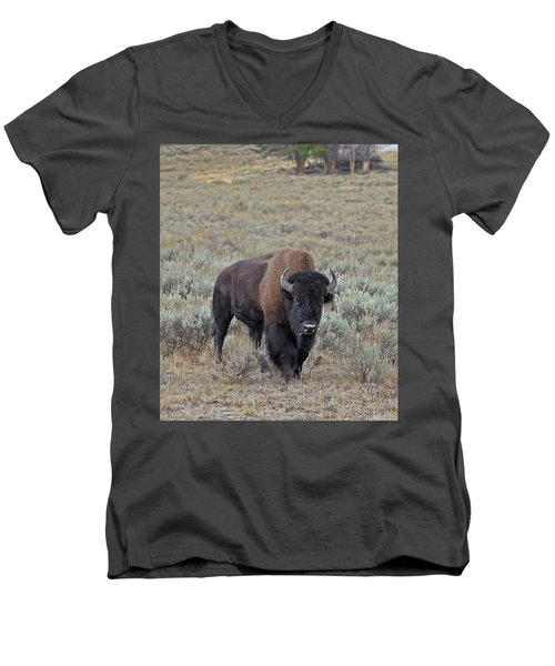 Handsome Bison Bull Men's V-Neck T-Shirt