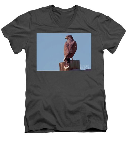 Harris Hawk Men's V-Neck T-Shirt by Anne Rodkin