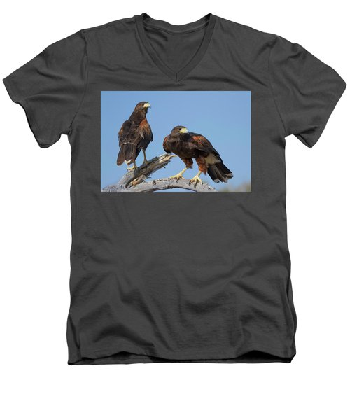 Harris Hawks Men's V-Neck T-Shirt