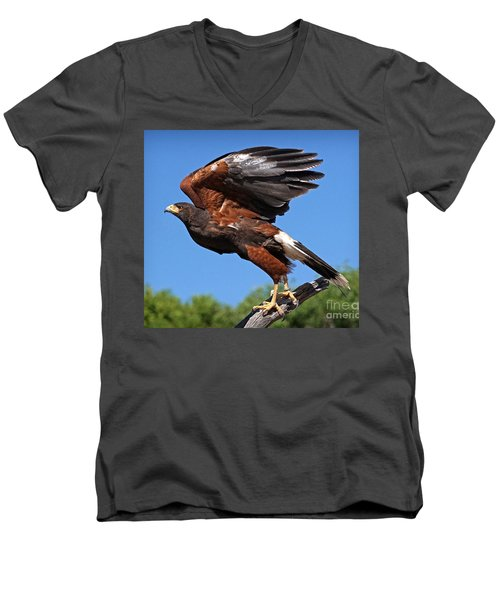 Men's V-Neck T-Shirt featuring the photograph Harris's Hawk by Martin Konopacki