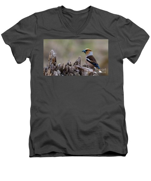 Hawfinch Perching Men's V-Neck T-Shirt by Torbjorn Swenelius