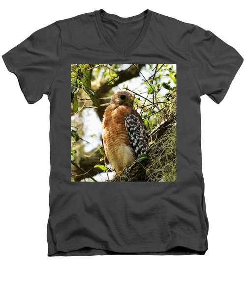 Hawk Taking A Rest On A Tree In Lakeland Florida Men's V-Neck T-Shirt