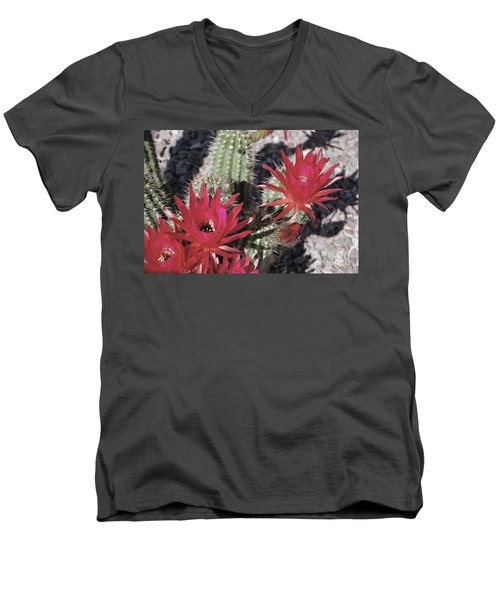 Hedgehog Cactus Men's V-Neck T-Shirt